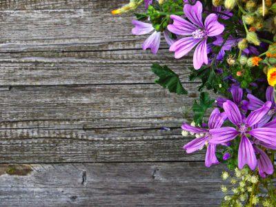 Purple flowers on weathered wood