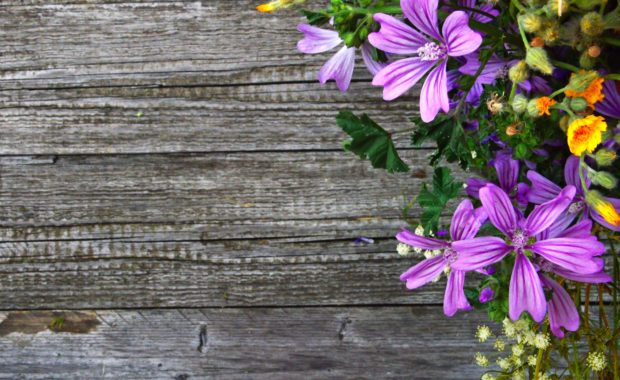 Purple flowers on weathered wood
