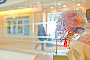 Brain in Skull